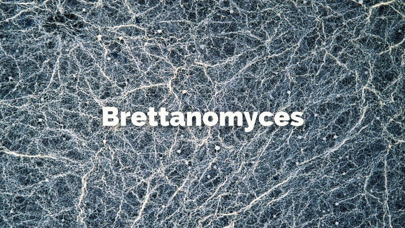 Brettanomyces with Christy Canterbury MW
