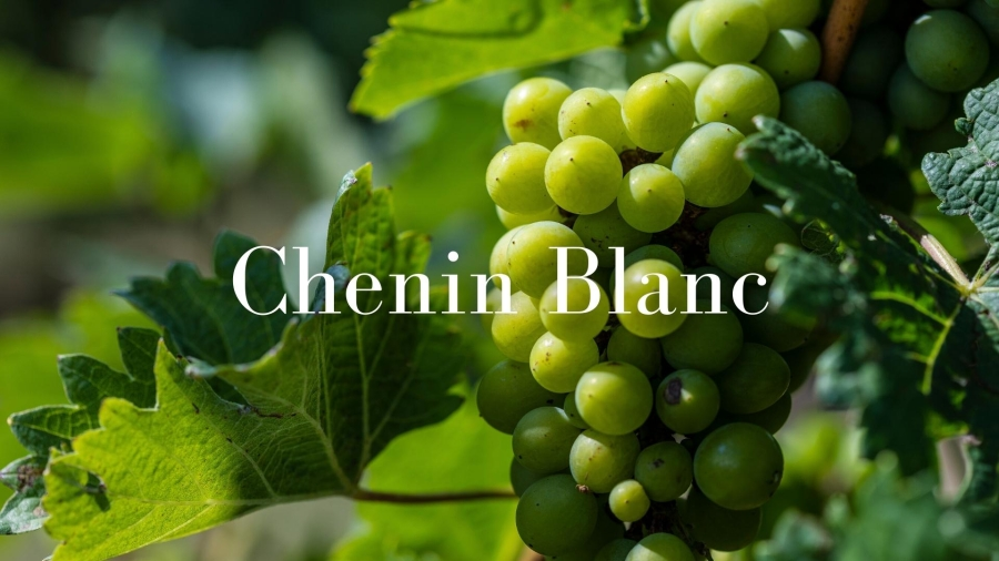 The Diversity of Loire Valley Chenin Blanc with Pascaline Lepeltier, MS