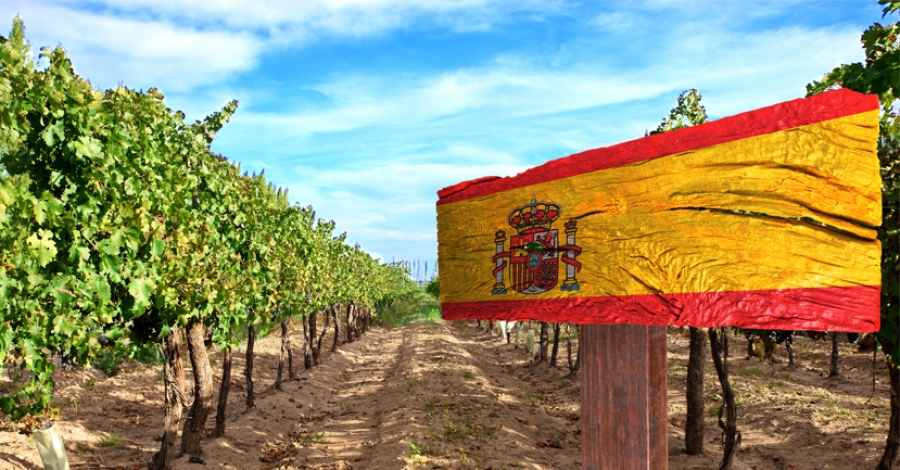 Top 10 reasons to study Spanish wine
