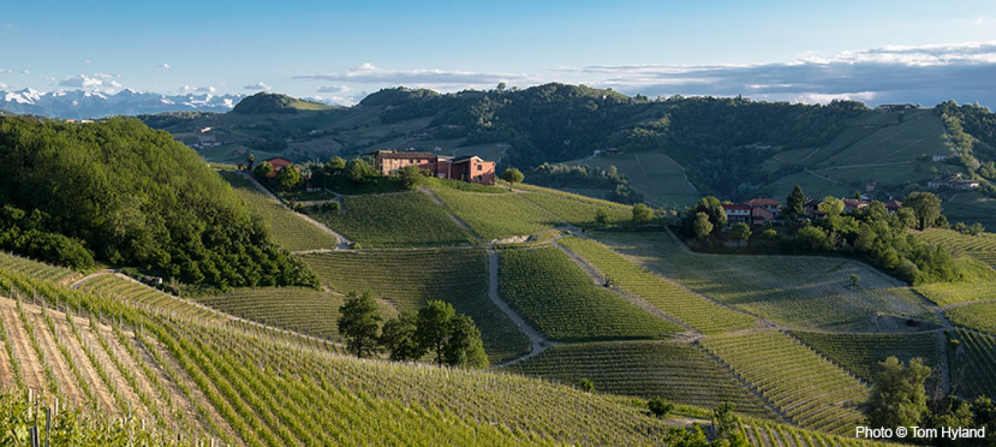 A Guide to Recent Barolo and Barbaresco Vintages